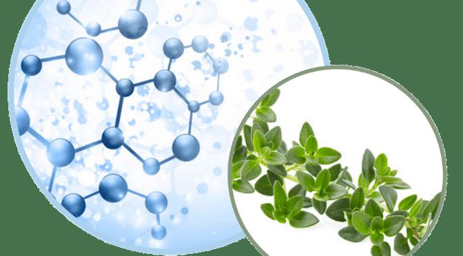 atom-thyme